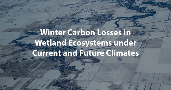 Winter Carbon Losses in Wetland Ecosystems under Current and Future Climates